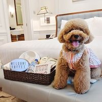 Plan a weekend retreat with your fur-kid. Purr-fect Weekends staycation package comes with a pet-fri